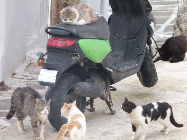 Katzenkarre