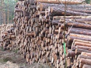 ordentlicher Wald