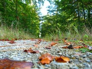 Herbstwaldweg