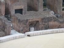 Gladiatorengato