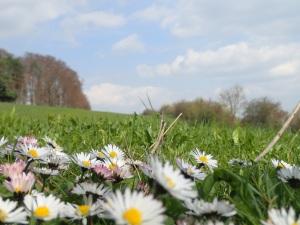 Gänseblümchen underfoot