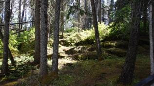 Waldaufwärt