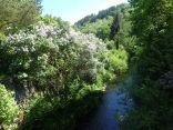 Ufer mit Flieder