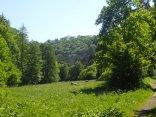 Wiese im Harz